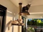 Nala, Mimzy & Summer