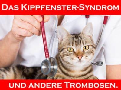 "Thrombosen bei Katzen u.a. ""Das Kippfenster-Syndrom"""