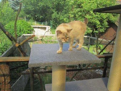 Eine Mieze auf einem Outdoor-Kratzbaum (der Garten ist mit Katzenschutznetz gesichert).