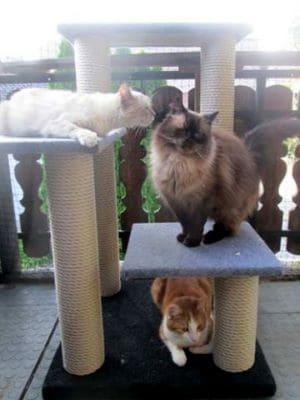 Drei Katzen genießen die Sonne auf dem Outdoor-Kratzbaum KingFinn.