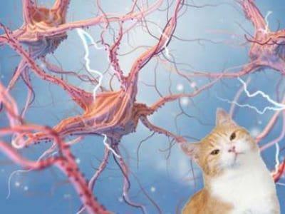 Epilepsie bei der Katze