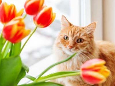 Diese Pflanzen sind giftig für Ihre Katze.