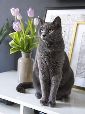 Eine Katze sitzt vor einem Tulpenstrauß.
