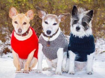 Hunde mit Pullovern