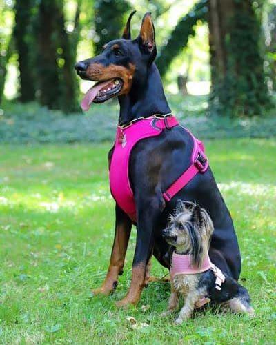 Unterschiedliche Hunde brauchen unterschiedliche Geschirre.