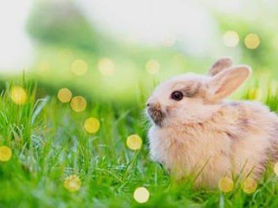 Ein Kaninchen sitzt im Gras.