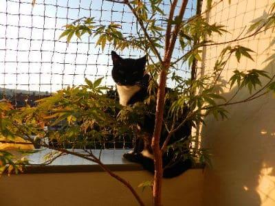 Eine Katze auf einem gesicherten Balkon