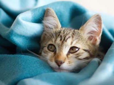 Eine Katze kuschelt sich in eine Fleecedecke.