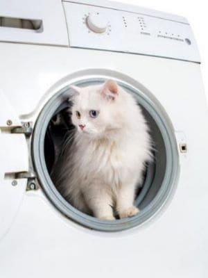 Das Bild zeigt eine Katze, die in der Waschmaschine sitzt.