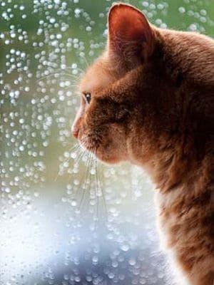 Bei extremen Wetterlagen sollte die Katze im Haus bleiben.