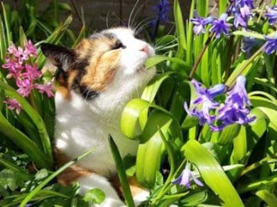19 Pflanzen, die nicht giftig für Katzen sind