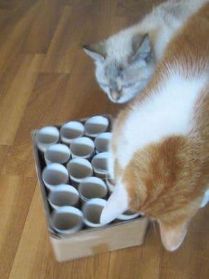 Zwei Katzen spielen an der selbstgebauten Fummelkiste.