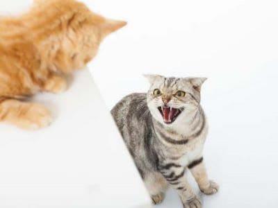 Katzen erfolgreich Zusammenführen - so klappt es in 4 Schritten. Außerdem:...