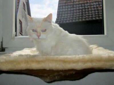 Das Bild zeigt eine Katze, der es auf ihrem kuschelig warmen Fensterplatz sichtlich gut gefällt.
