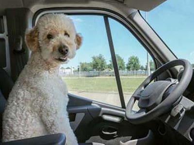 Hund sitzt am Steuer