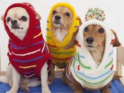 Drei Hunde in Pullovern