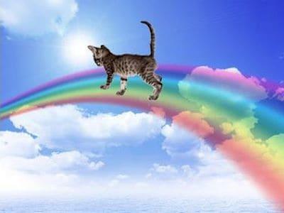 Wenn die Katze über die Regenbogenbrücke geht.