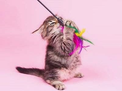 Eine kleine Katze spielt mit einer Spielangel