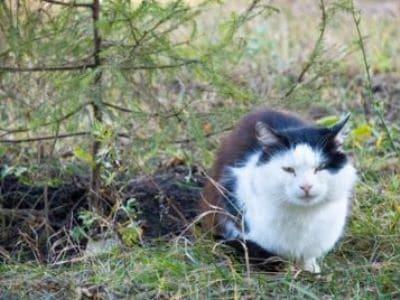 Streunerkatzen benötigen unsere Hilfe.