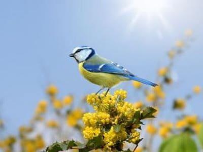 Ein Vogel im eigenen Garten.