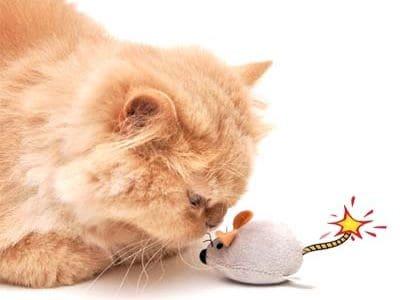 Oft gefährlich - Katzenspielzeug